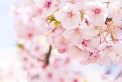 公園の花のイメージ