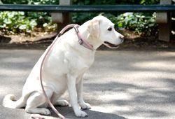 犬と散歩のイメージ